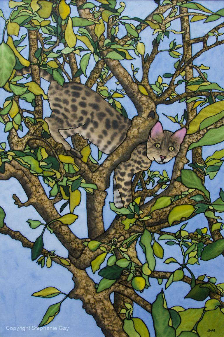 Spotted in a Tree - Bengal Cat