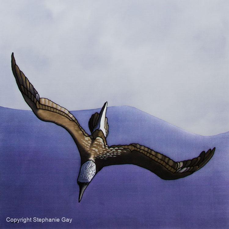 The-Dive-(Blue-Footed-Booby)