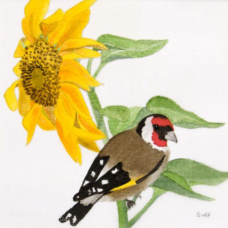Looking for Lunch - Sunflower and Goldfinch