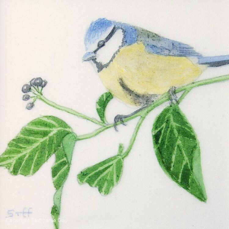 Blue Tit and Ivy