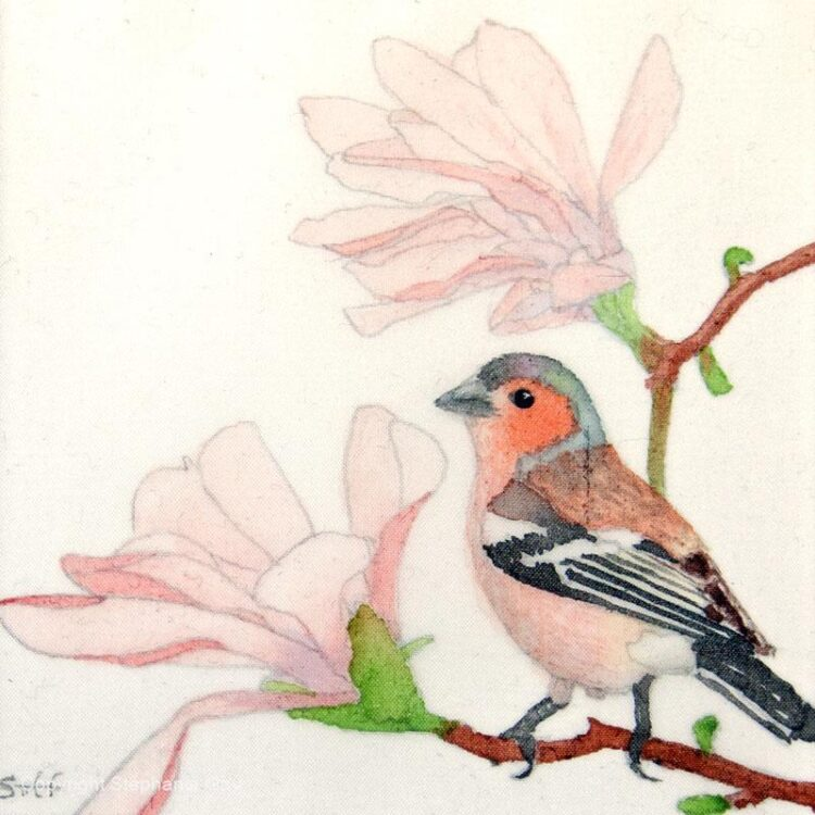 Chaffinch and Magnolia